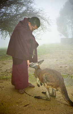 Lama Zopa Rinpoche with kangaroo in Adelaide, Australia, 1983. Photos taken or donated by Wendy Finster.
