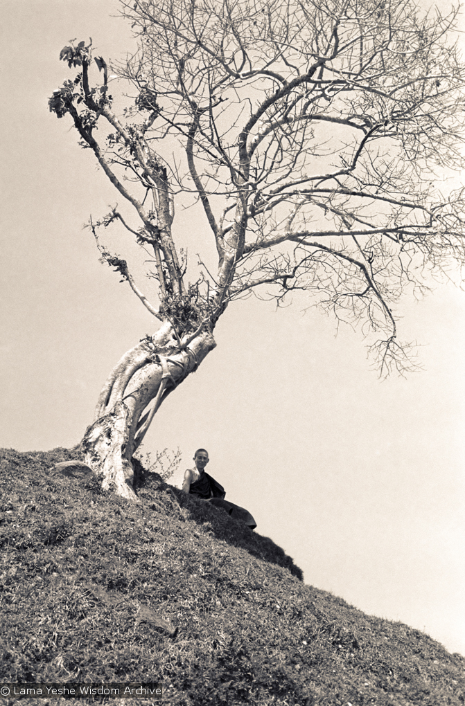 """(15148_ng.psd) Ann McNeil (Anila Ann) under a tree on """"astrologer's hill"""", Kopan Monastery, Nepal, 1972. Anila Ann was an early student of the Lamas and one of the first western women to ordain as a nun."""