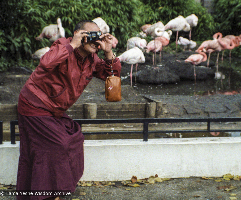 Lama Yeshe taking photos of people taking photos at the zoo in Amsterdam, 1980. Photo by Jan-Paul Kool.