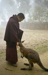 Lama Zopa Rinpoche with kangaroo in Adelaide, Australia, 1983. Photo: Wendy Finster.