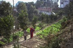 (03567_ng-3.JPG) Lama in the vegetable garden with Bir Bahadur, Kopan Monastery, 1981. In the background is the Sangha House with second story addition. Jan-Paul Kool (photographer)