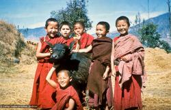 (09829_sl.psd) Mount Everest Center students with a baby water buffalo, Kopan Monastery, Nepal, 1976.