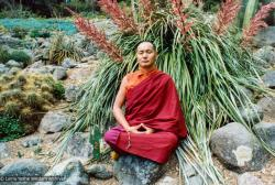 (12530_pr.jpg) Lama Yeshe meditating in the botanical gardens, Berkeley, California, 1974 Photo donated by Judy Weitzner.