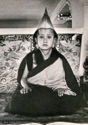 (13245_pr3.psd) Enthronement of Yangsi Rinpoche, 1975. Kelsang Puntsog Rinpoche, the son of Lama Yeshe's old friend Jampa Trinley, was later recognized to be the reincarnation of Geshe Ngawang Gendun, one of Lama's teachers. In January 1975 he was enthroned at Kopan Monastery, Nepal, after which he became known to all as Yangsi Rinpoche. Elizabeth Drukier donated the photo.