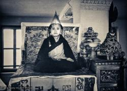 (15903_pr.psd) Enthronement of Yangsi Rinpoche, 1975. Kelsang Puntsog Rinpoche, the son of Lama Yeshe's old friend Jampa Trinley, was later recognized to be the reincarnation of Geshe Ngawang Gendun, one of Lama's teachers. In January 1975 he was enthroned at Kopan Monastery, Nepal, after which occasion he became known to all as Yangsi Rinpoche.