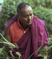 "Lama Yeshe in the gardens at Kopan Monastery, 1981. Photo by Jan-Paul Kool. ""The red down vest he wore in Dharamsala was untraditional in that it was a modern Western garment stuffed with feathers, but traditional in that it did not have sleeves. He also wore a fringed zen, when the rule is that it should have cleanly hemmed edges. Lama's zen was also a funny fuchsia color and bore obvious signs of age, yet he wore it everywhere."""