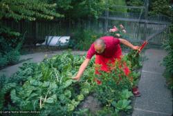 (39486_sl-3.tif) Lama Yeshe gardening in Berkeley, CA, 1980. Jon Landaw (photographer)
