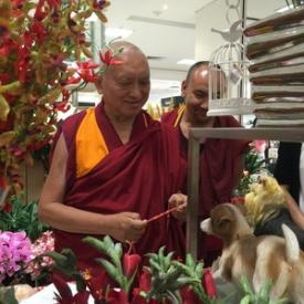 Lama Zopa Rinpoche shops for flowers in Singapore, March 2016. Photo: Roger Kunsang.