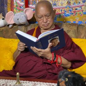 Lama Zopa Rinpoche enjoying his copy of Big Love, Kopan Monastery, Nepal, April 2020. Photo: Ven. Roger Kunsang.