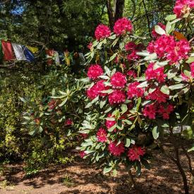 Spring in Lincoln, MA, 2019